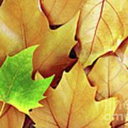 Dry Fall Leaves Art Print by Carlos Caetano