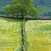 Dry Stone Wall And Lone Tree Art Print