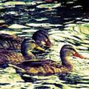 Duck Duck Duck  Art Print