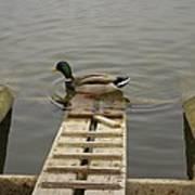 Duck Ramp Art Print