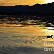 Duck Swimming Art Print
