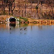 Ducks Flying Over Pond I Art Print