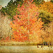 Ducks In An Autumn Pond Art Print