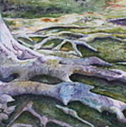 Dunbar Cave Roots  Print by Patsy Sharpe