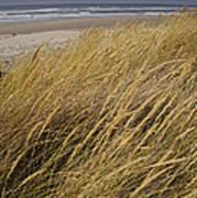 Dune Grass On The Oregon Coast Art Print
