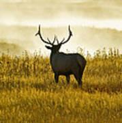 Dusky Elk Art Print