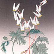 Dutdhman's Breeches Art Print