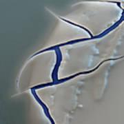 E. Coli Endotoxin Sem Art Print