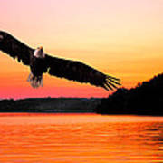 Eagle At Break Of Dawn Art Print