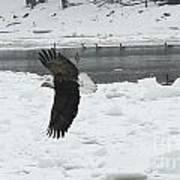 Eagle By River Art Print