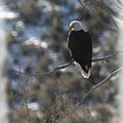 Eagle In Tree 2 Art Print