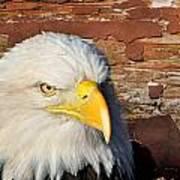 Eagle On Brick Art Print