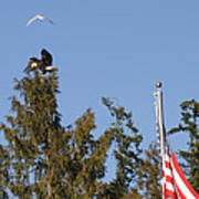 Eagle Rallies Round The Flagpole Art Print