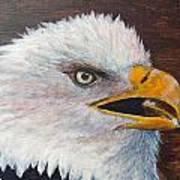 Eagle Study Art Print