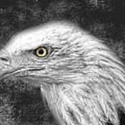 Eagle Two Art Print