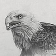 Eagles Quest Art Print
