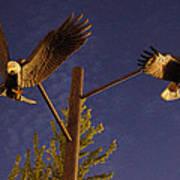 Eagles Suspended Art Print