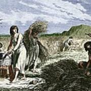 Early Humans Harvesting Crops Art Print
