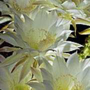 Easter Lily Cactus Bouquet Art Print