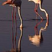 Eating Flamingos Art Print
