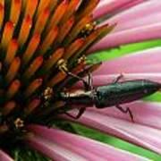 Echinacea Visitor Art Print