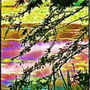 Edge Of The Pond Art Print