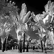 Eerie Palm Trees Art Print