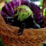 Eggplants From Sicily Art Print