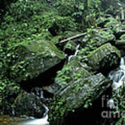 El Yunque National Forest Rocks And Waterfall Print by Thomas R Fletcher