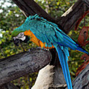 Elegant Parrot Art Print