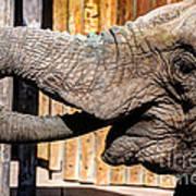 Elephant Feeding Time At The Zoo Art Print
