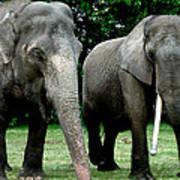 Elephant Meeting Art Print