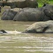 Elephant Pond Mole Park Reserve Ghana Art Print