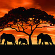 Elephant Sun Set Art Print