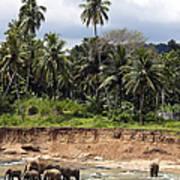 Elephants In The River Art Print