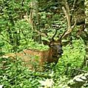 Elk In The Forest   Art Print by Glenn Lawrence