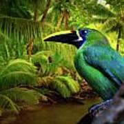 Emerald And Blue Toucan  Art Print