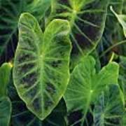 Emerald Leaves Art Print