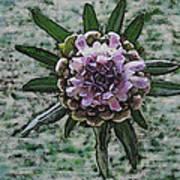 Emerging Pincushin Art Print