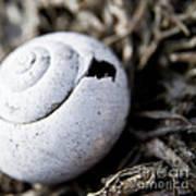 Empty Snail Shell Art Print