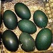 Emu Eggs Art Print