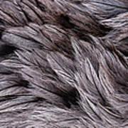 Emu Feathers Art Print