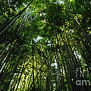 Enchanted Forest Haleakala National Park Art Print
