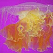 Enchanted Jellyfish 2 Art Print