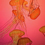 Enchanted Jellyfish 3 Art Print