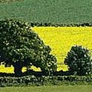 English Field Of Yellow 2 Art Print