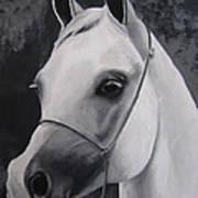 Equestrian Silver Art Print