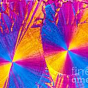 Erythromycin Crystal Art Print