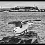 Escape From Alcatraz Art Print