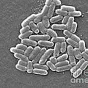 Escherichia Coli, Sem Art Print by CDC/Science Source